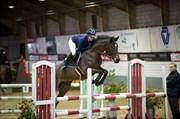 Hest til salg - GRAUFFS QUALITY