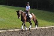 Hest til salg - HOT SUN SG