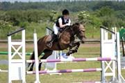 Hest til salg - ÅBYGÅRDS TRISHA