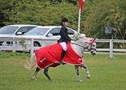 Hest til salg - spinelly