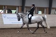 Hest til salg - FIRFOD PRINS CASPIAN