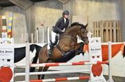 Hest til salg - ELLELY'S SCIROCCO