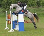 Hest til salg - BAVARIA LOVE