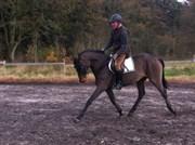 Hest til salg - KILD'S FIREBALL