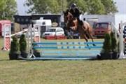 Hest til salg - LIANOS P