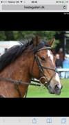Hest til salg - RANDRUPMØLLES GRACE KELLY