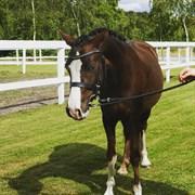 Hest til salg - Donago´s Miss Guinevere