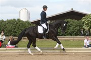 Hest til salg - MØGELVANGS CHAKI NOIR