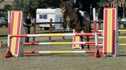 Hest til salg - LUNA