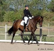 Hest til salg - PIXI