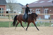 Hest til salg - ORCHID'S LUCILE