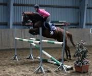 Hest til salg - Brandy Vallentino