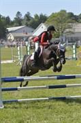 Hest til salg - IBRAHIM