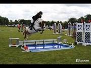 Hest til salg - SUGAR