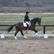 Hest til salg - STALD LILLESKOV LA'LIGA