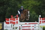 Hest til salg - TREVAL