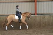 Hest til salg - CLOSE TO YOU