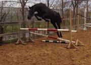 Hest til salg - CANAJUS C