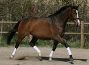 Hest til salg - STAUGAARD'S FATAMORGANA