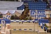 Hest til salg - QUARTERMAIN B