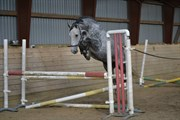 Hest til salg - MAY LADOGINA