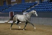 Hest til salg - PARIS SKOVMOSEGÅRD