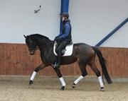 Hest til salg - MATINA ZACK