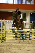 Hest til salg - CASSIOPEIA