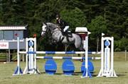 Hest til salg - VONG´S DUNDEE