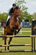 Hest til salg - CANDY PETERSBORG