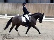 Hest til salg - UKKI LOUWRA