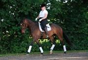 Hest til salg - CELINA E.
