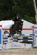 Hest til salg - FANTASI GERSDORF