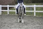 Hest til salg - TT CALLE CONSTANTIN