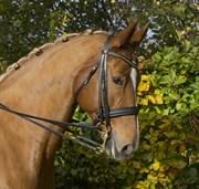 Hest til salg - BIRKEGÅRDENS CHANELL