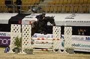 Hest til salg - CLICQUOT