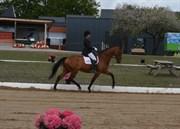 Hest til salg - CALYPSO