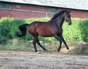 Hest til salg - LALUNA
