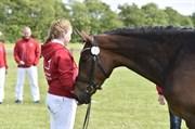 Hest til salg - FARIN