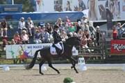 Hest til salg - LUNDEMARKSGÅRDS LAYOUT