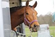 Hest til salg - BAMBOOCHA B