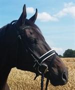 Hest til salg - RIMINI