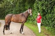 Hest til salg - LÆRKEGAARDENS LIVA