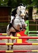 Hest til salg - RINEEN BOY