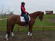 Hest til salg - GAISJAZ KILEN