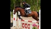 Hest til salg - RAWELLA