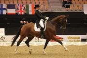 Hest til salg - HEVI´S FUTURO