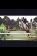 Hest til salg - MAAM BOY