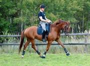Hest til salg - PURPLE MAGIC