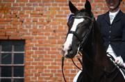 Hest til salg - DELICIOUS